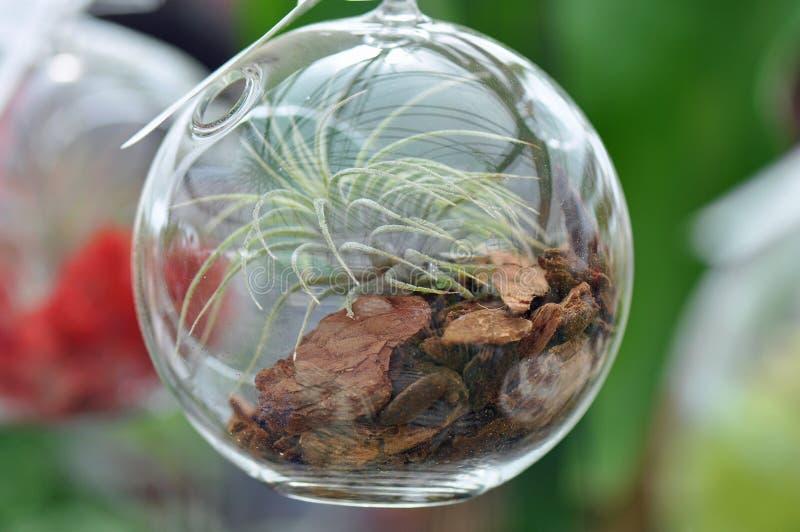 Terrario de cristal de la esfera foto de archivo
