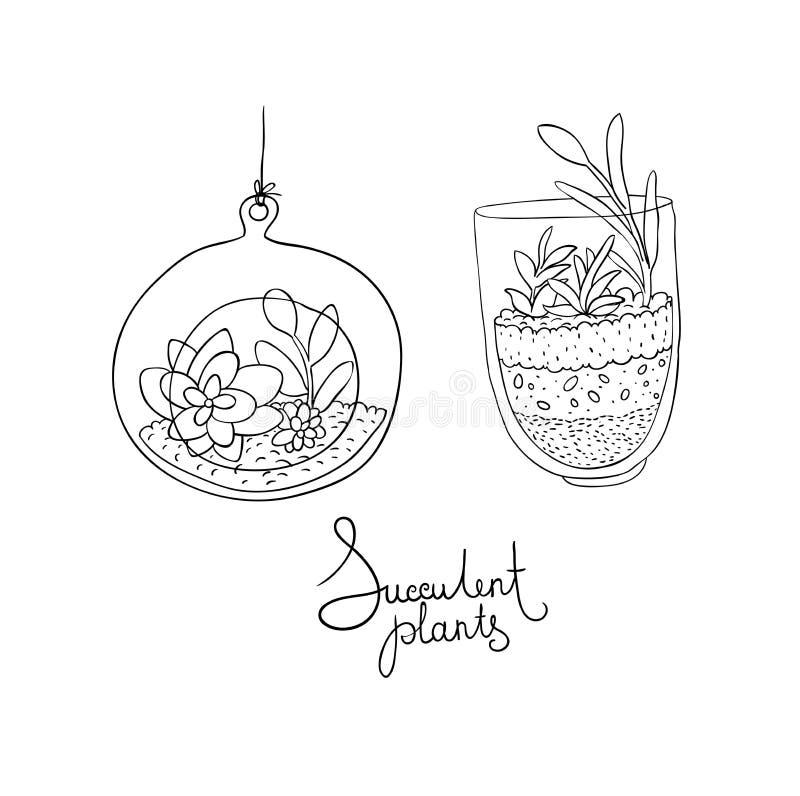 Terrarios de cristal del vector con los succulents fijados ilustración del vector