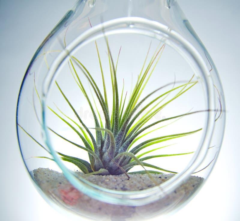 Terrarium da planta fotos de stock