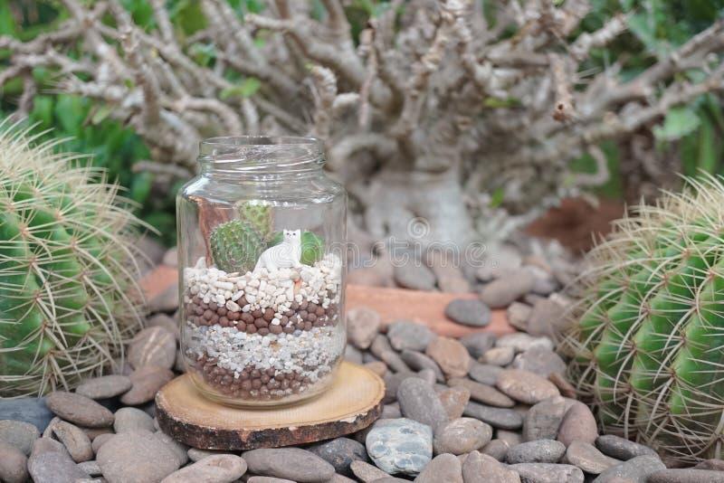 Terrarium do cacto Mini jardim suculento no terrariu da garrafa de vidro foto de stock royalty free