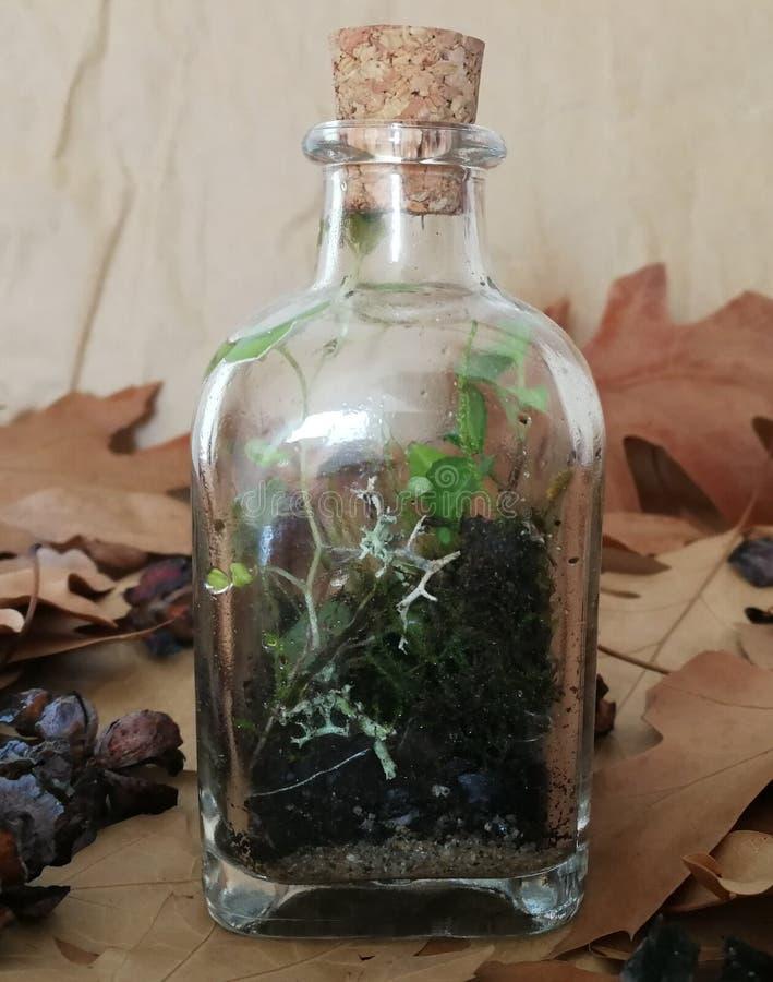 Terrarium do musgo foto de stock