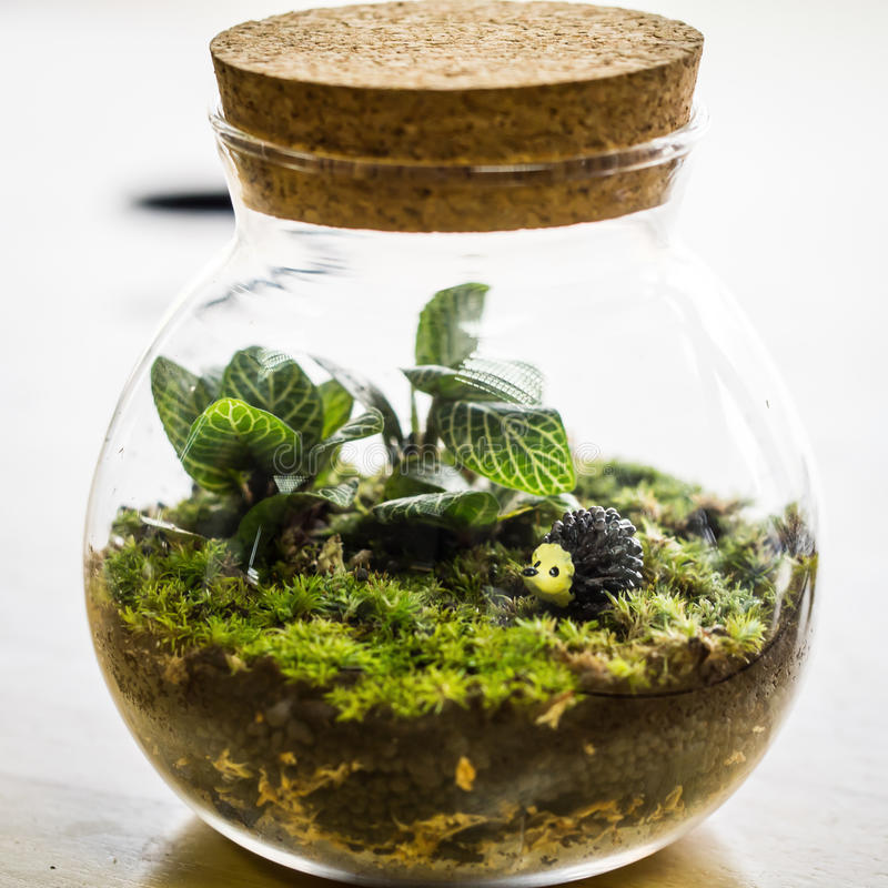 Terrarium gesloten lijn van ademhaling, huis die decoratie planten royalty-vrije stock foto