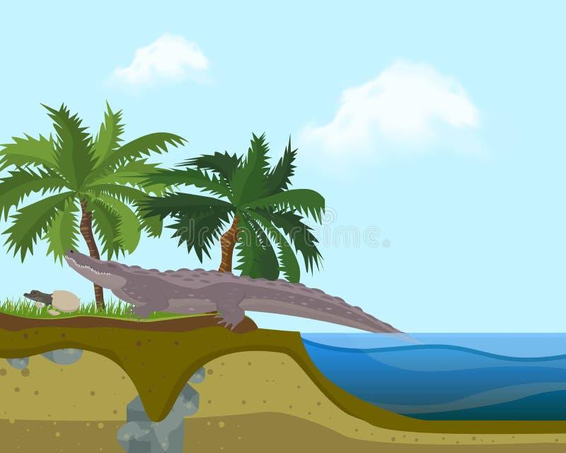 Terrarium island banner vector illustration. Crocodile walking on beach near palm trees on grass. Small child or kid royalty free illustration