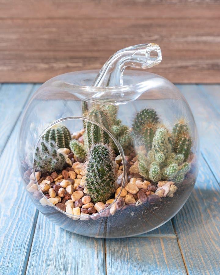 Free Terrarium Plant In The Glass Stock Image - 191628781