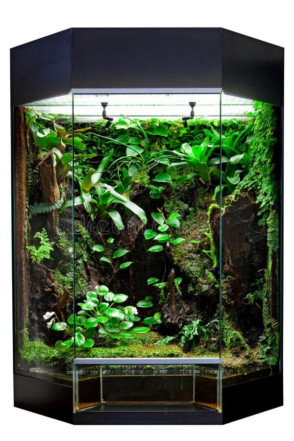 terrarium for tropical rainforest pet stock photo image of frog cage 20134544. Black Bedroom Furniture Sets. Home Design Ideas