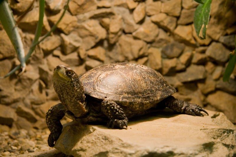 Terrarium turtle stock images