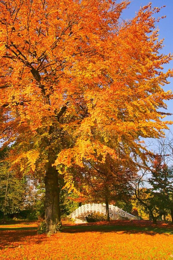 Download Terras Inglesas Da Ponte Do Branco De Woerlitz Imagem de Stock - Imagem de foliage, água: 16867075