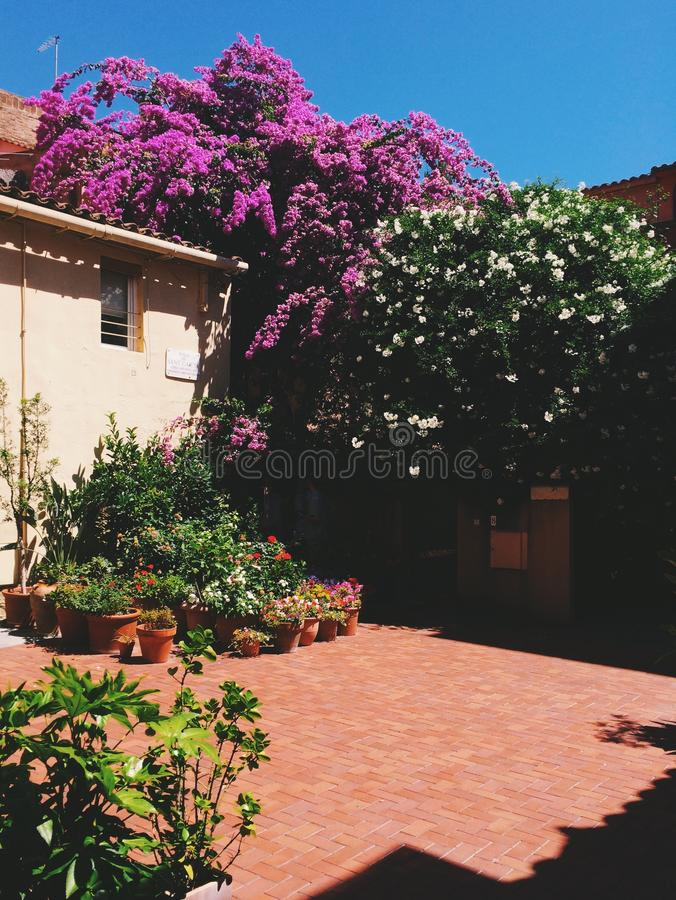 Terras met bloemen royalty-vrije stock afbeelding