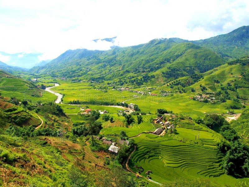 Terrass för Sapa risfältris i Vietnam royaltyfria foton