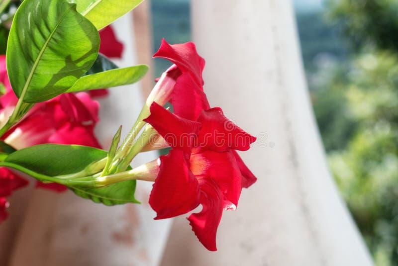 Terrass som dekoreras med en blomkruka som fylls med röda blommor fotografering för bildbyråer