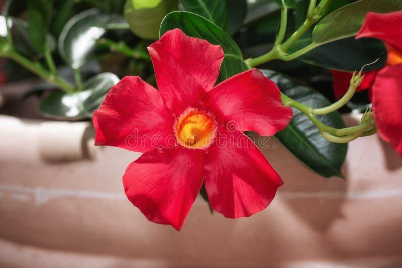 Terrass som dekoreras med en blomkruka som fylls med röda blommor arkivfoton