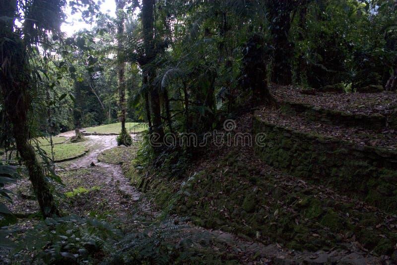 Terrasse, Ciudad Perdida (ville perdue), Colombie images stock