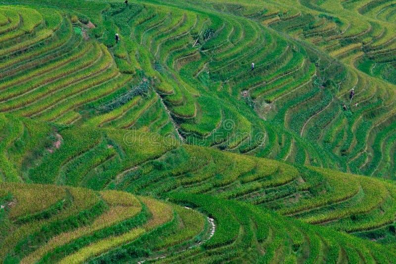 Terrasse de riz image stock