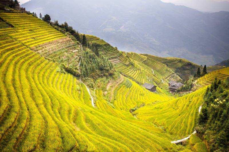 Terrasse de riz dans Longshen Guilin Chine image stock