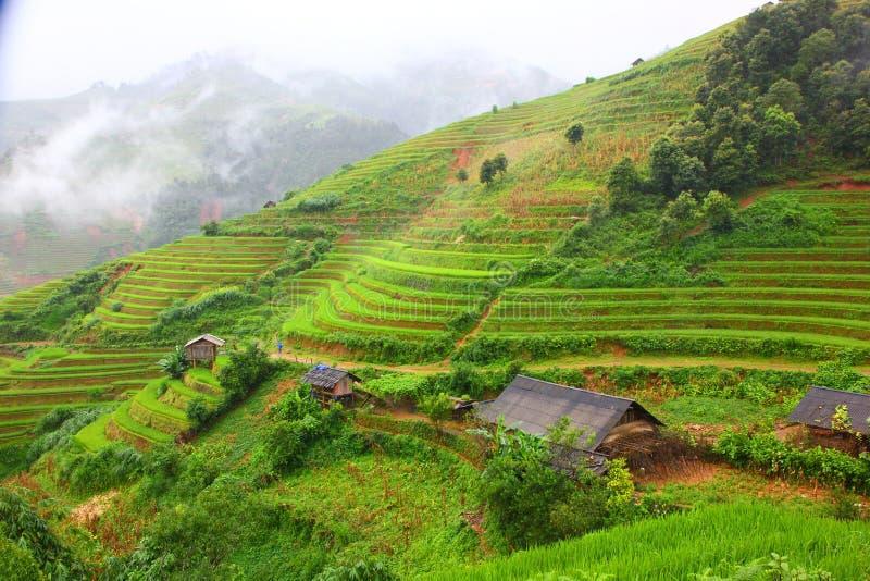 Terrasse de riz sur la haute terre dans SAPA VIETNAM image libre de droits