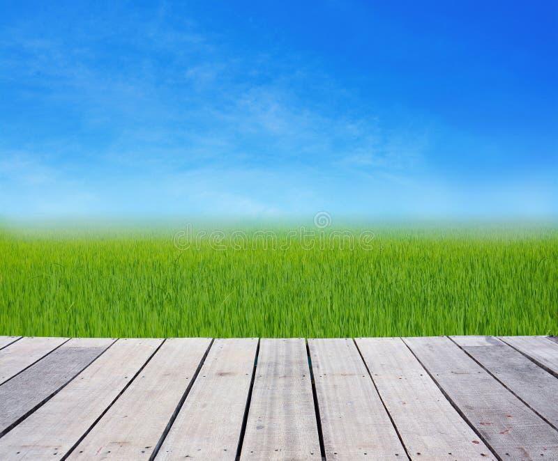 Terrasse en bois avec l'herbe verte de gisement de riz sur le ciel bleu image libre de droits