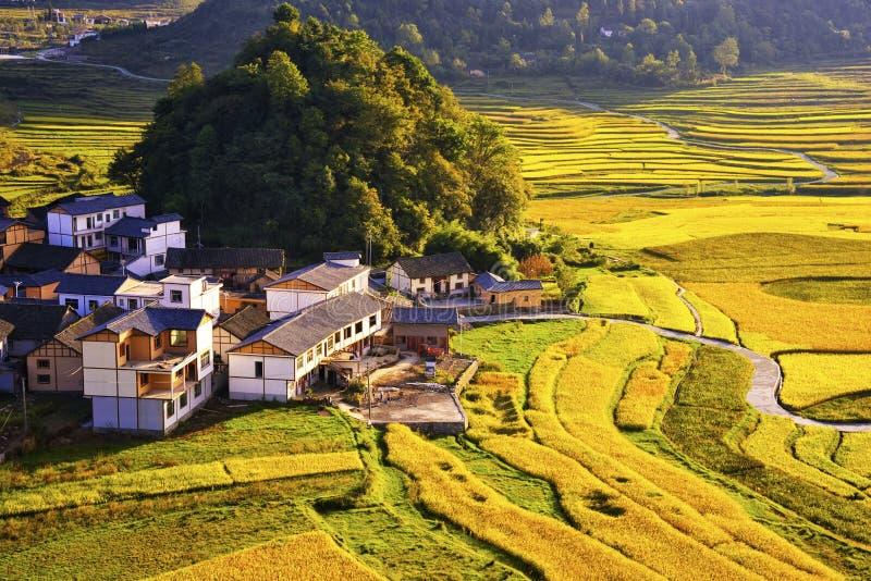 Terrasse an Guizhou-Porzellan stockfotografie