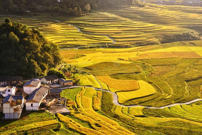 Terrasse an Guizhou-Porzellan stockbild