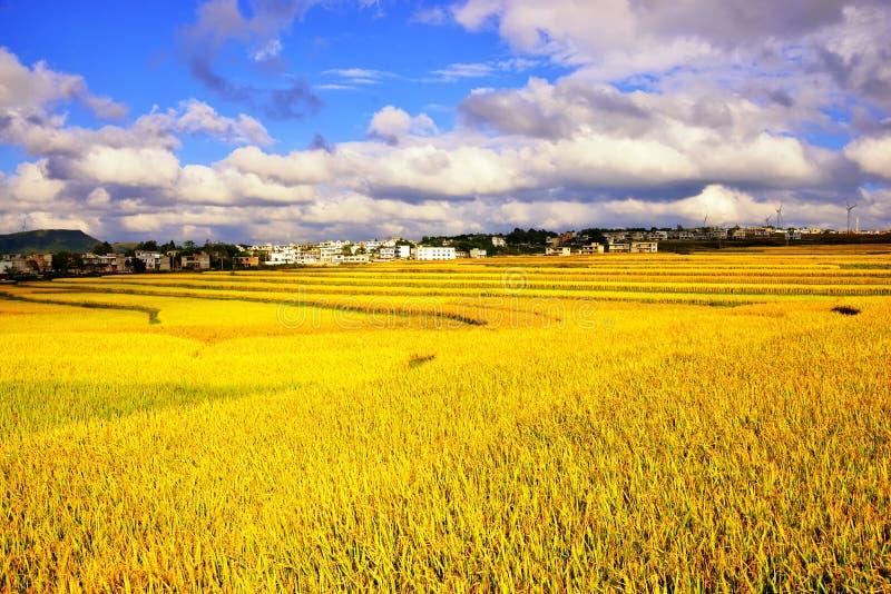 Terrasse an Guizhou-Porzellan lizenzfreie stockfotos