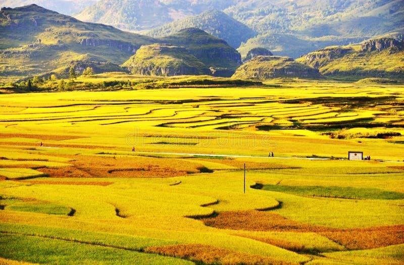 Terrasse an Guizhou-Porzellan stockbilder