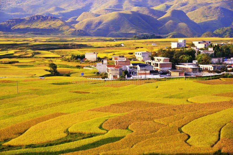 Terrasse an Guizhou-Porzellan lizenzfreies stockbild