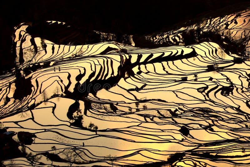 Terrassefeld stockfoto