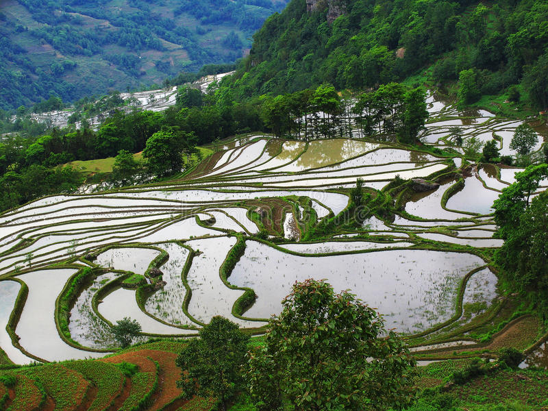 Terrassement de riz-paddy de Yunnan image stock