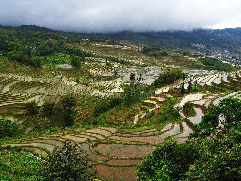 Terrassement de riz-paddy de Yunnan photo stock
