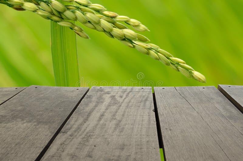 Terrassenholz und schöner ungeschälter Reis für Hintergrundverwendung stockfotografie