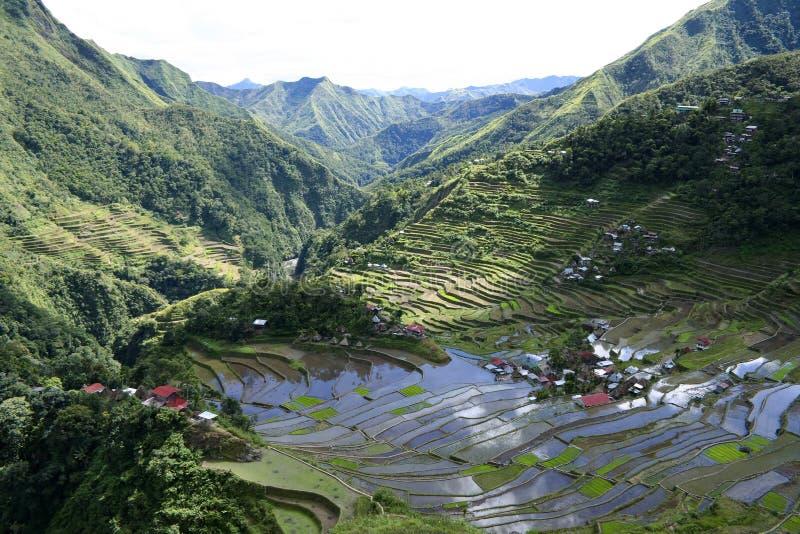 terrasser för batadifugaophilippines rice royaltyfria foton