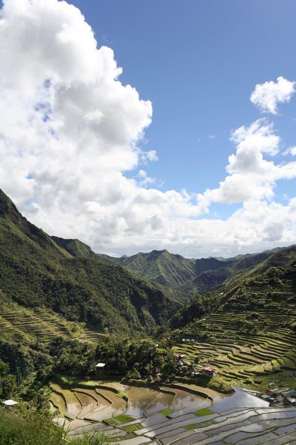 terrasser för batadifugaophilippines rice arkivbilder