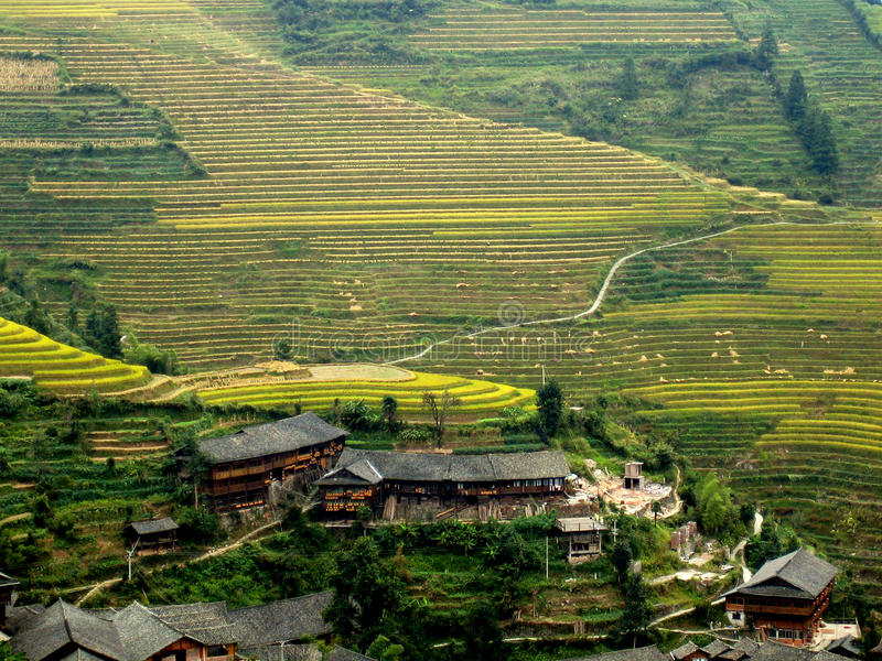 terrasser för porslinguilin rice arkivbilder