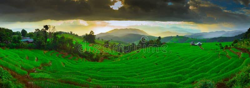 Terrasser för solnedgångförbudPapongpieng ris, Chiang Mai, arkivbild