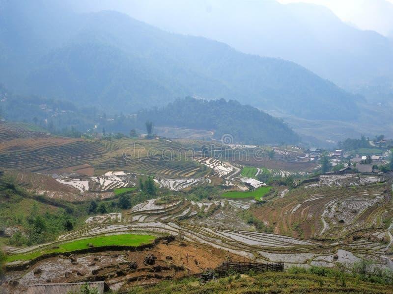 Terrasser i Asien, Sapa, Vietnam arkivfoton