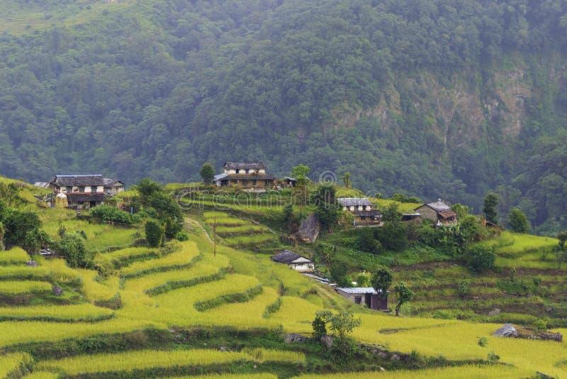 terrasser, risfält och byar i Himalayas royaltyfria bilder
