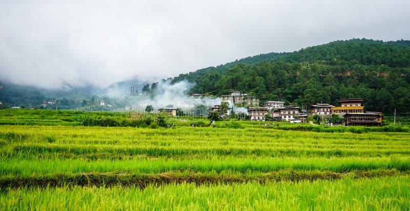Terrasserad jordbruksmark med risfältfältet royaltyfria bilder