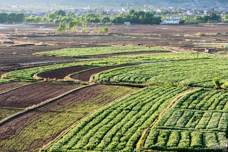Terrasserad jordbruksmark nära den Shaxi byn i Yunnan royaltyfri bild