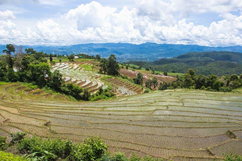 Terrasserad risfält i Chiangmai, Thailand royaltyfri foto