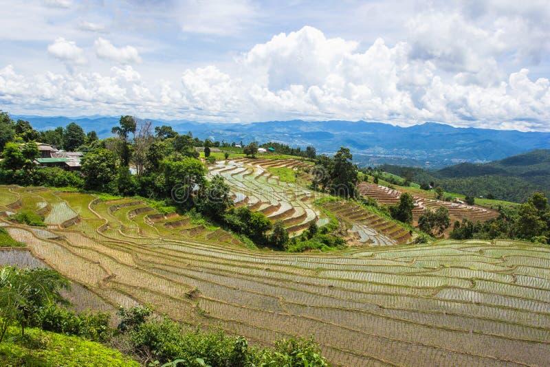 Terrasserad risfält i Chiangmai, Thailand royaltyfri bild