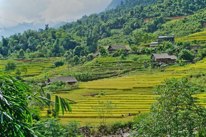 Terrasserad risfält i det bergiga Sapa området, nordvästliga Vietnam arkivbilder