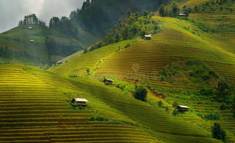 Terrasserad risfält i Mu Cang Chai, Vietnam royaltyfri bild