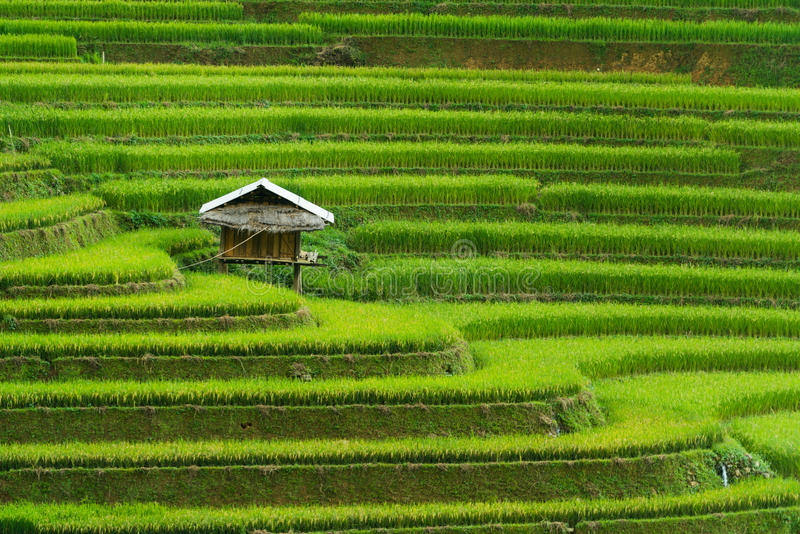 Terrasserad risfält i Mu Cang Chai, Vietnam royaltyfria foton