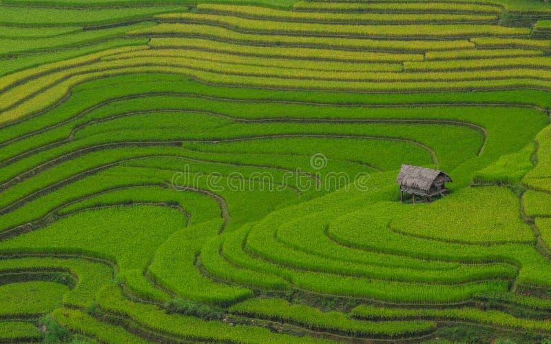 Terrasserad risfält i nordliga Vietnam arkivfoton