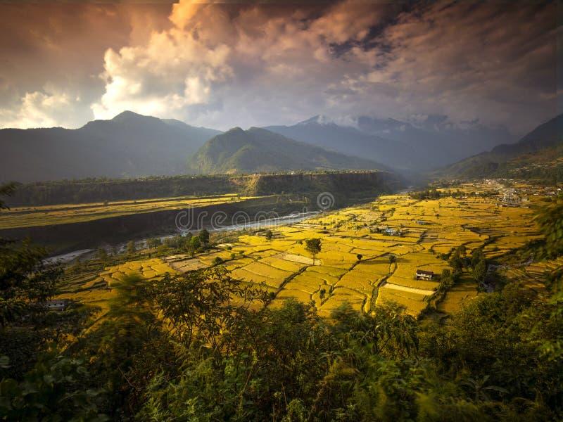 Terrasserade Paddy Field i kandakkien Nepal arkivbild
