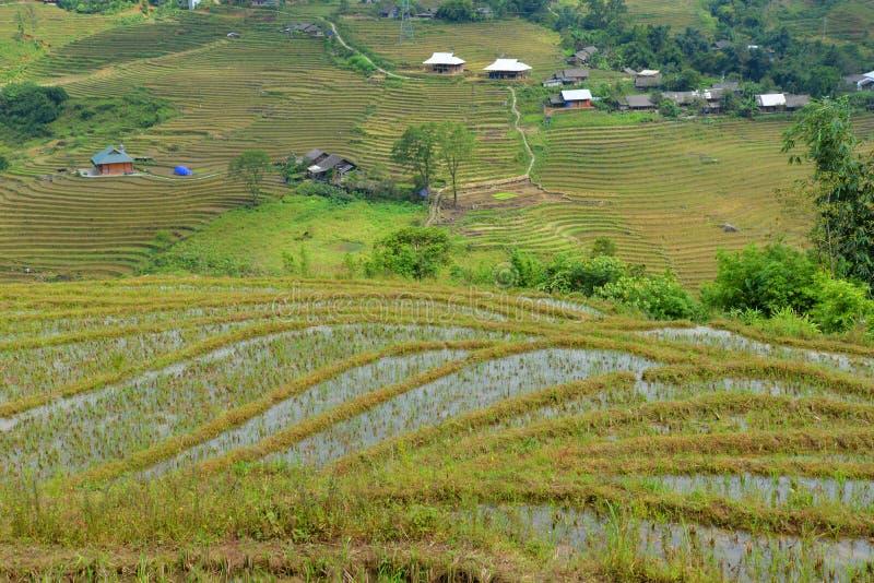 Terrasserade risfält i bergregionen av Sa-PA, Vietnam arkivbilder