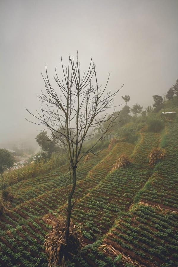 Terrasserade risfält i jordbruks- bygd Kathmandu Valley, Nepal royaltyfri fotografi