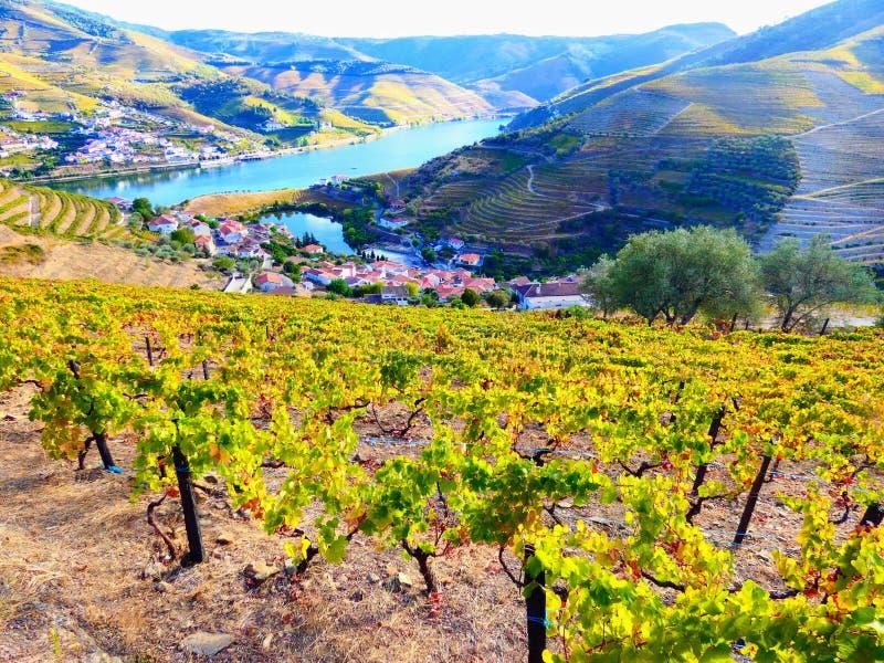 Terrasserade vingårdar bildar backarna av Portugal ` s Douro River Valley royaltyfria bilder