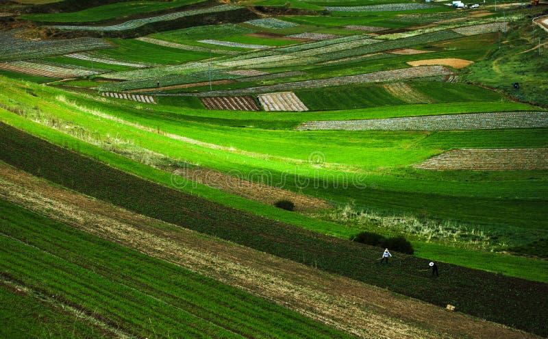 Terrasserat fält med två bönder royaltyfri bild