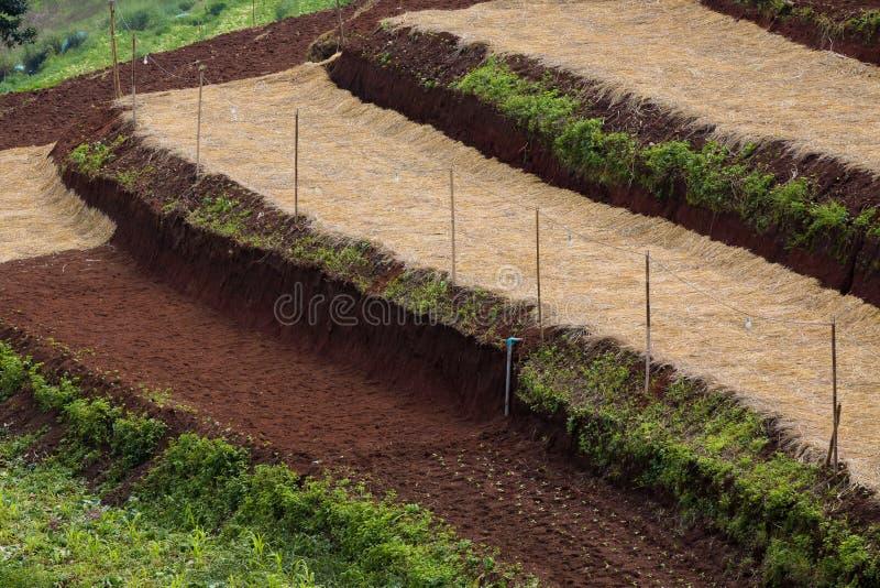 Terrasserat fält som förberedas för att planera fotografering för bildbyråer