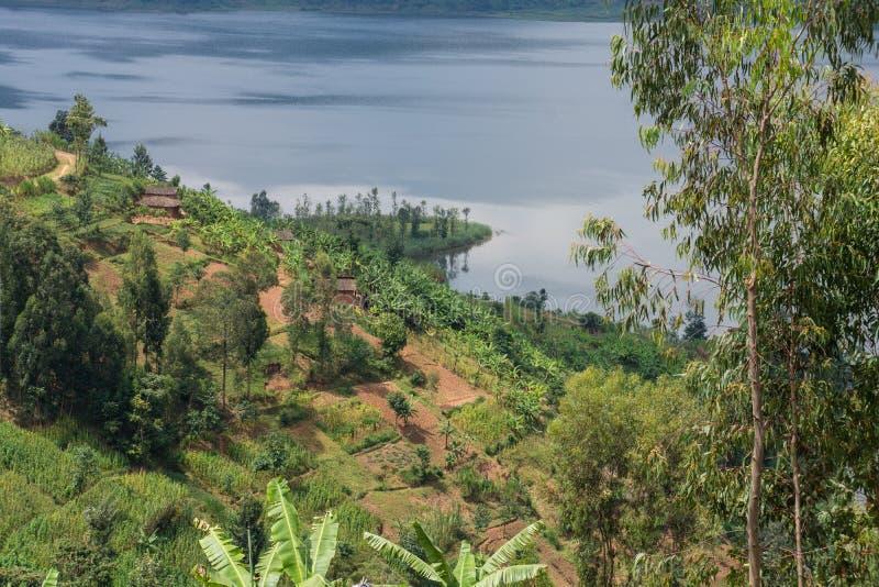 Terrasserat fält vid sjön Ruhondo, Rwanda royaltyfri fotografi